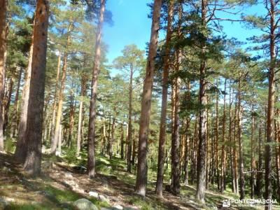 Siete Picos[Serie clásica]:Sierra del Dragón;ribeira sacra lugo pinsapar de grazalema viajes para